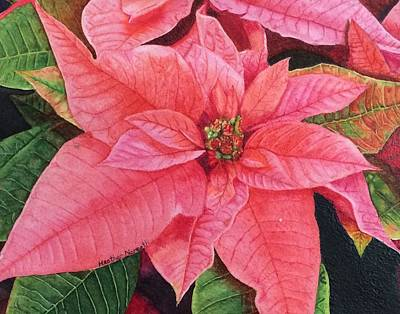 Poinsettia  Poster by Heather Norseth