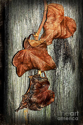 Poisoned Ivy By Kaye Menner Poster by Kaye Menner