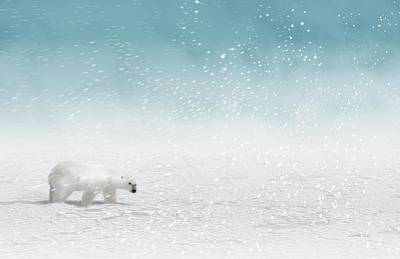 Polar Bear In Snow Poster by John Wills