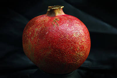 Pomegranate Poster by Terence Davis