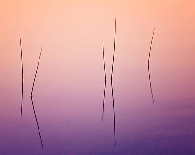 Pond Reeds - Abstract Poster by Thomas Schoeller