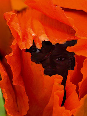 Poppy Faces By Jean Noren Poster by Jean Noren