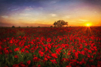 Poppy Field At Sundown Poster by Georgiana Romanovna