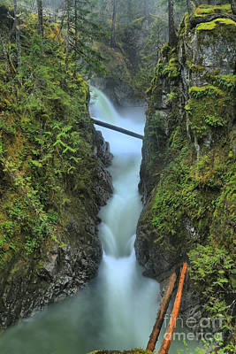 Port Alberni Rainforest Waterfall Poster by Adam Jewell