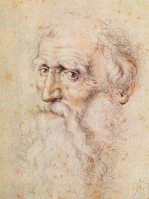 Portrait Of A Bearded Old Man Poster by Albrecht Durer or Duerer