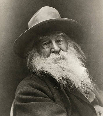 Portrait Of Walt Whitman Poster by George Cox
