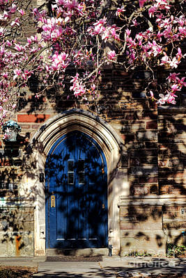 Princeton University Door And Magnolia Poster by Olivier Le Queinec