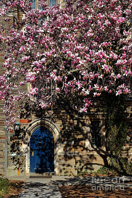 Princeton University Magnolia And Door Poster by Olivier Le Queinec