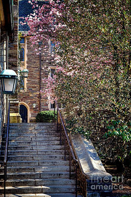 Princeton University Old Stairway Poster by Olivier Le Queinec