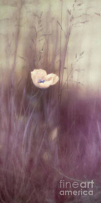 Pulchritude Poster by Priska Wettstein