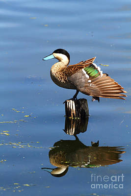 Puna Teal Reflections Poster by James Brunker