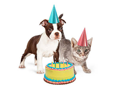 Puppy And Kitten With Birthday Cake Poster by Susan  Schmitz