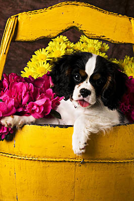Puppy In Yellow Bucket  Poster by Garry Gay