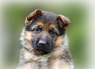 Puppy Portrait Poster by Sandy Keeton