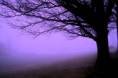 Purple Haze December Fog By The Sleepy Pin Oak Pa Poster by Thomas Woolworth