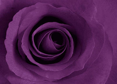 Purple Rose Of Artsy Poster by Leonard Rosenfield