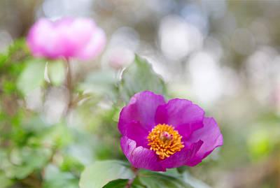 Purple Spring Wild Flower Romantic Nature Poster by Dirk Ercken