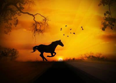 Radiant Run Horse And Sunrise Poster by Stephanie Laird