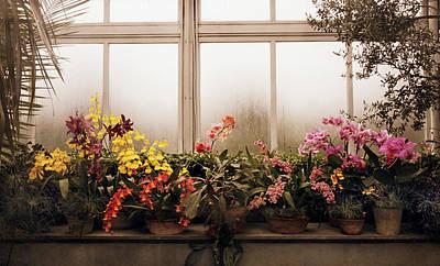 Rainy Day Orchids Poster by Jessica Jenney