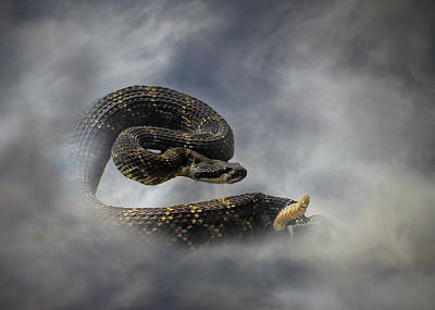 Rattle Snake Poster by Stephanie Laird