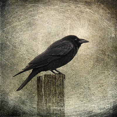 Raven Poster by Elena Nosyreva