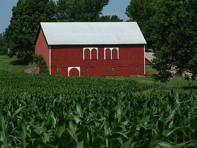Red Barn Corn Poster by Michael L Kimble