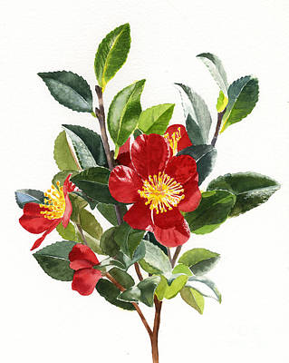 Red Christmas Camellias Poster by Sharon Freeman