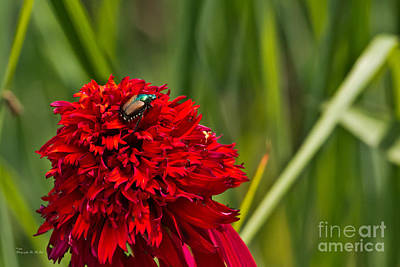 Red Flower And Beetle Poster by Ms Judi