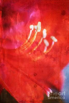 Red Intrigue Poster by Ella Kaye Dickey