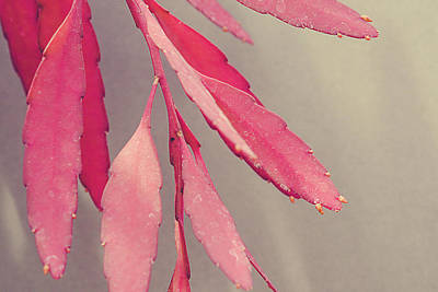 Red Leaves Poster by Joy StClaire