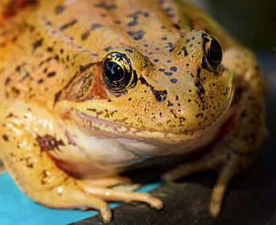Red Leg Frog Poster by Jean Noren