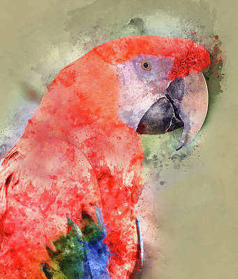 Red Parrot Digital Watercolor On Photograph Poster by Brandon Bourdages