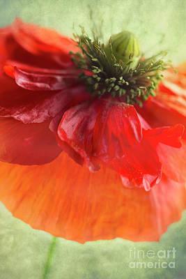 Red Poppy Poster by Elena Nosyreva