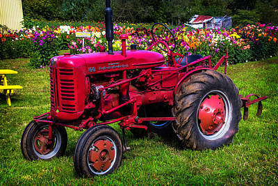 Red Tractor Dahlia Gardens Poster by Garry Gay
