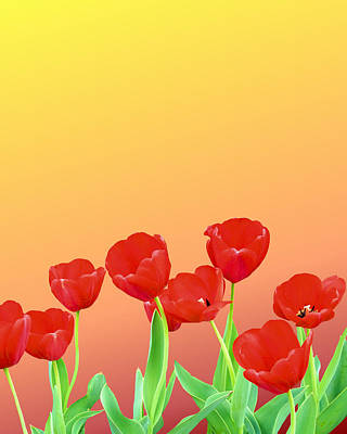 Red Tulips Poster by Kristin Elmquist