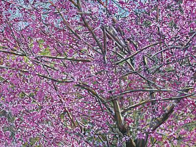 Redbud Tree Poster by Nadi Spencer