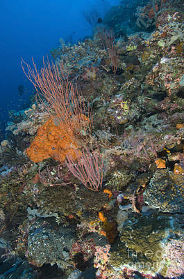 Reef Scape In The Solomon Islands Poster by Steve Jones