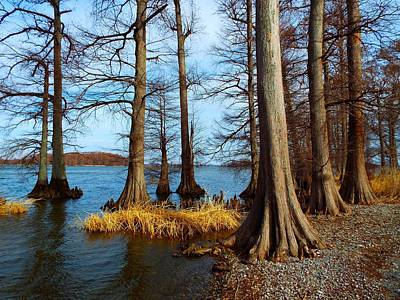 Reelfoot In Winter Poster by Julie Dant