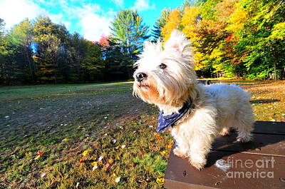 Reminiscing Westie Poster by Catherine Reusch Daley