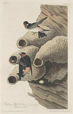 Republican Cliff Swallow Poster by John James Audubon