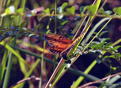 Resting Butterfly Poster by Kay Lovingood