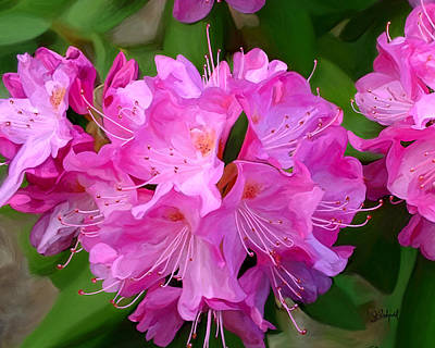 Rhododendron Poster by Sue  Brehant