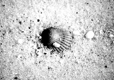 Ribbed Sea Shell Macro Buried In Fine Wet Sand Black And White Digital Art Poster by Shawn O'Brien