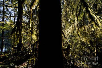 Rice Lake Big Tree Silohuette Poster by Terry Elniski