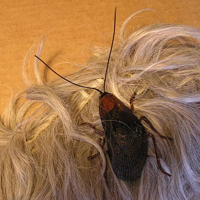Roach Hair Clip Poster by Roger Swezey