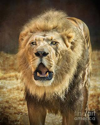 Roar Poster by Jamie Pham