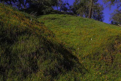 Rolling Hills With Poppies Poster by Garry Gay