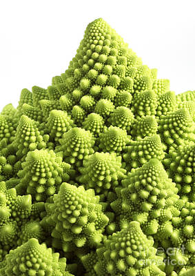 Romanesco Broccoli Or Cauliflower Poster by Gerard Lacz