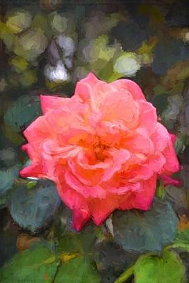 Rose 332 Poster by Pamela Cooper