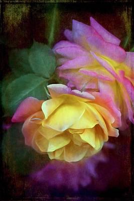 Rose 364 Poster by Pamela Cooper